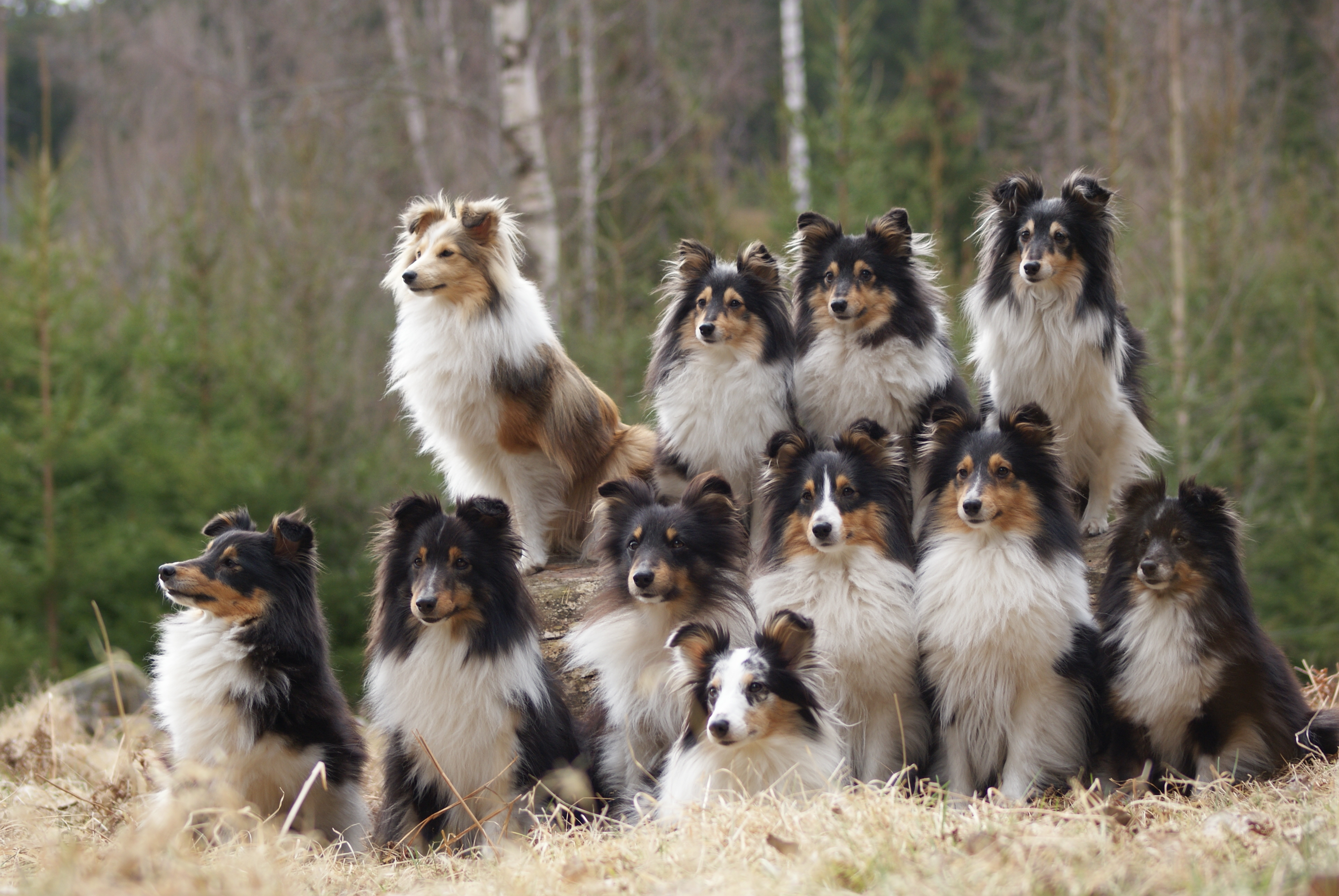 Image of a group of dogs awaiting orders by Jonas Löwgren